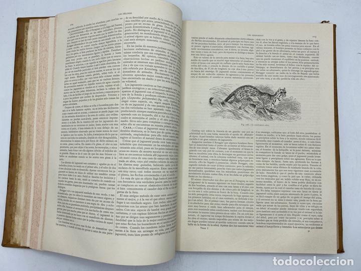 Libros antiguos: LA HISTORIA NATURAL. DR. A. E. BREHM. DEL TOMO 1 AL 7. EDITORES MONTANER Y SIMON.BARCELONA,1880-81. - Foto 5 - 269069853