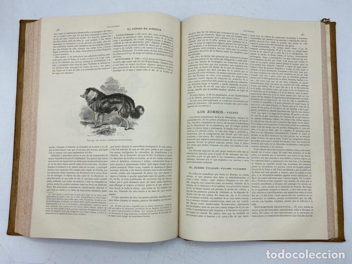 Libros antiguos: LA HISTORIA NATURAL. DR. A. E. BREHM. DEL TOMO 1 AL 7. EDITORES MONTANER Y SIMON.BARCELONA,1880-81. - Foto 6 - 269069853