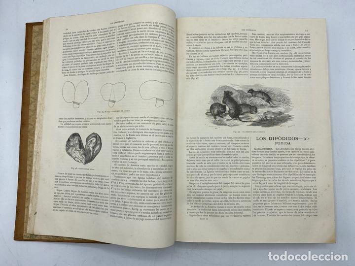 Libros antiguos: LA HISTORIA NATURAL. DR. A. E. BREHM. DEL TOMO 1 AL 7. EDITORES MONTANER Y SIMON.BARCELONA,1880-81. - Foto 11 - 269069853