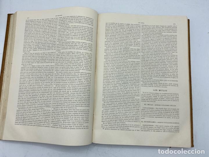 Libros antiguos: LA HISTORIA NATURAL. DR. A. E. BREHM. DEL TOMO 1 AL 7. EDITORES MONTANER Y SIMON.BARCELONA,1880-81. - Foto 12 - 269069853