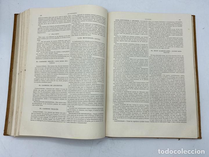 Libros antiguos: LA HISTORIA NATURAL. DR. A. E. BREHM. DEL TOMO 1 AL 7. EDITORES MONTANER Y SIMON.BARCELONA,1880-81. - Foto 13 - 269069853