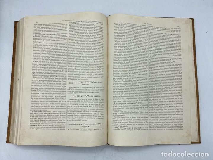 Libros antiguos: LA HISTORIA NATURAL. DR. A. E. BREHM. DEL TOMO 1 AL 7. EDITORES MONTANER Y SIMON.BARCELONA,1880-81. - Foto 15 - 269069853