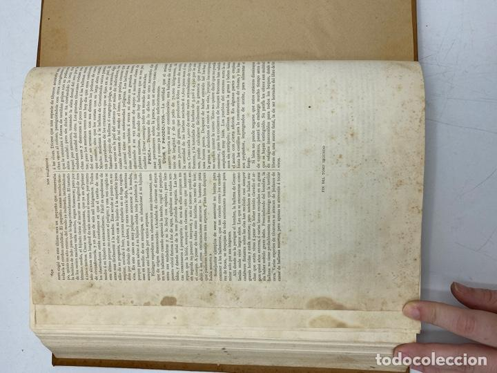 Libros antiguos: LA HISTORIA NATURAL. DR. A. E. BREHM. DEL TOMO 1 AL 7. EDITORES MONTANER Y SIMON.BARCELONA,1880-81. - Foto 16 - 269069853