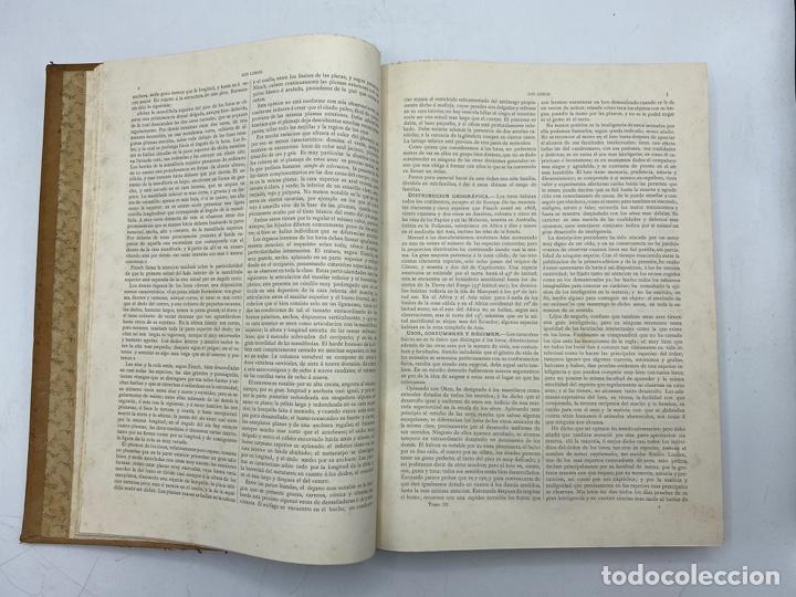 Libros antiguos: LA HISTORIA NATURAL. DR. A. E. BREHM. DEL TOMO 1 AL 7. EDITORES MONTANER Y SIMON.BARCELONA,1880-81. - Foto 20 - 269069853