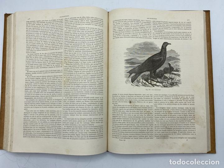 Libros antiguos: LA HISTORIA NATURAL. DR. A. E. BREHM. DEL TOMO 1 AL 7. EDITORES MONTANER Y SIMON.BARCELONA,1880-81. - Foto 22 - 269069853