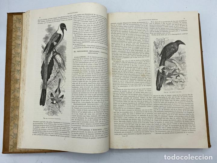 Libros antiguos: LA HISTORIA NATURAL. DR. A. E. BREHM. DEL TOMO 1 AL 7. EDITORES MONTANER Y SIMON.BARCELONA,1880-81. - Foto 27 - 269069853