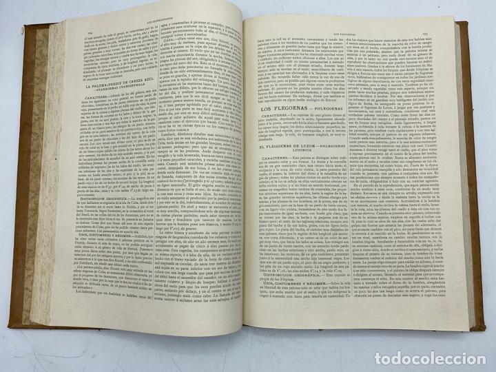 Libros antiguos: LA HISTORIA NATURAL. DR. A. E. BREHM. DEL TOMO 1 AL 7. EDITORES MONTANER Y SIMON.BARCELONA,1880-81. - Foto 28 - 269069853