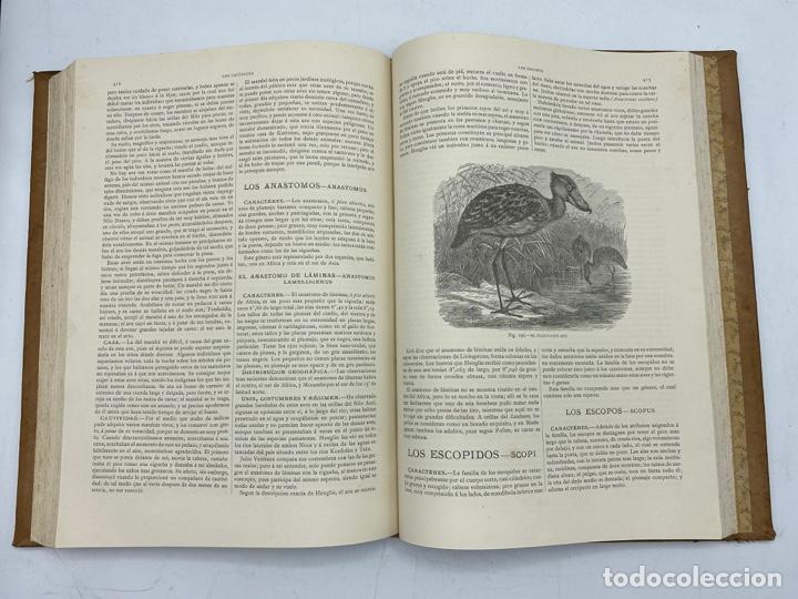 Libros antiguos: LA HISTORIA NATURAL. DR. A. E. BREHM. DEL TOMO 1 AL 7. EDITORES MONTANER Y SIMON.BARCELONA,1880-81. - Foto 29 - 269069853