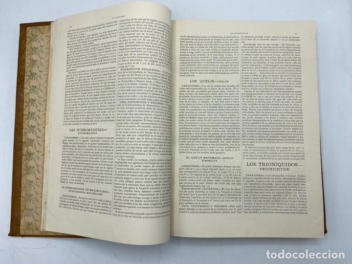 Libros antiguos: LA HISTORIA NATURAL. DR. A. E. BREHM. DEL TOMO 1 AL 7. EDITORES MONTANER Y SIMON.BARCELONA,1880-81. - Foto 34 - 269069853