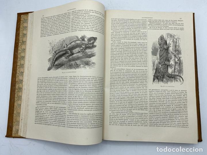 Libros antiguos: LA HISTORIA NATURAL. DR. A. E. BREHM. DEL TOMO 1 AL 7. EDITORES MONTANER Y SIMON.BARCELONA,1880-81. - Foto 35 - 269069853