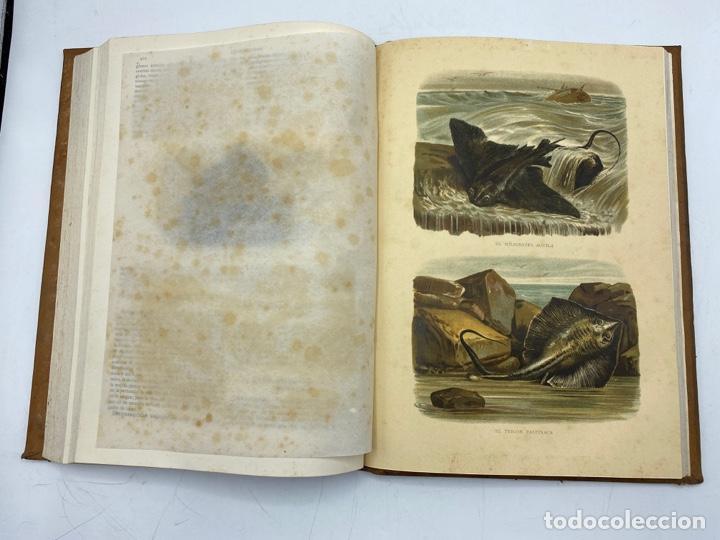 Libros antiguos: LA HISTORIA NATURAL. DR. A. E. BREHM. DEL TOMO 1 AL 7. EDITORES MONTANER Y SIMON.BARCELONA,1880-81. - Foto 37 - 269069853