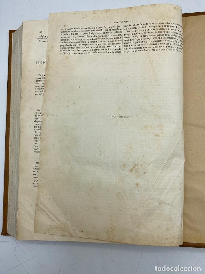 Libros antiguos: LA HISTORIA NATURAL. DR. A. E. BREHM. DEL TOMO 1 AL 7. EDITORES MONTANER Y SIMON.BARCELONA,1880-81. - Foto 38 - 269069853