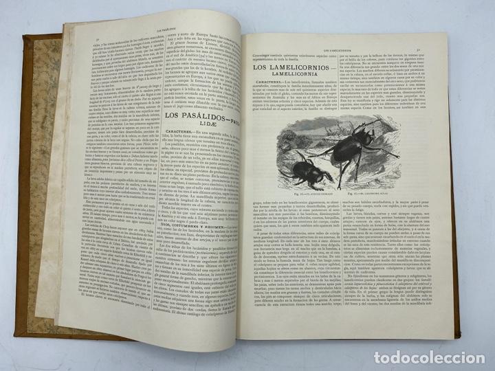 Libros antiguos: LA HISTORIA NATURAL. DR. A. E. BREHM. DEL TOMO 1 AL 7. EDITORES MONTANER Y SIMON.BARCELONA,1880-81. - Foto 42 - 269069853