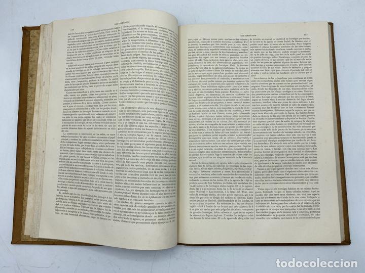 Libros antiguos: LA HISTORIA NATURAL. DR. A. E. BREHM. DEL TOMO 1 AL 7. EDITORES MONTANER Y SIMON.BARCELONA,1880-81. - Foto 43 - 269069853