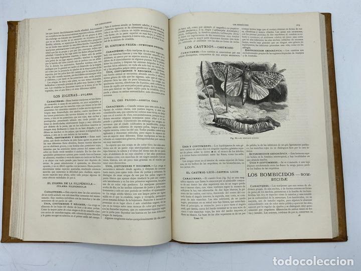 Libros antiguos: LA HISTORIA NATURAL. DR. A. E. BREHM. DEL TOMO 1 AL 7. EDITORES MONTANER Y SIMON.BARCELONA,1880-81. - Foto 44 - 269069853