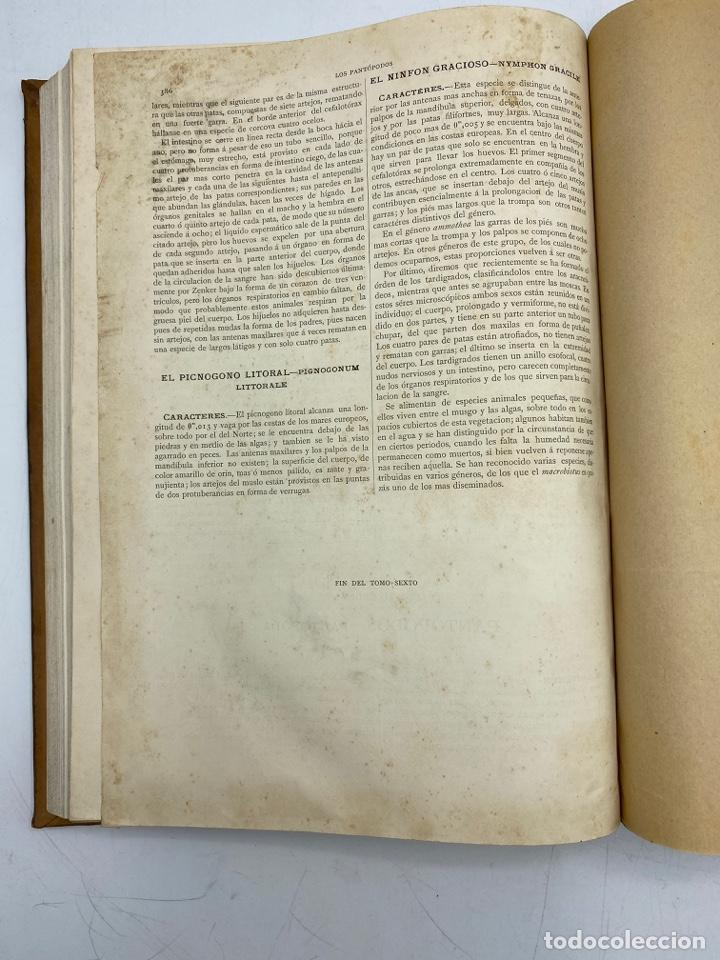 Libros antiguos: LA HISTORIA NATURAL. DR. A. E. BREHM. DEL TOMO 1 AL 7. EDITORES MONTANER Y SIMON.BARCELONA,1880-81. - Foto 45 - 269069853