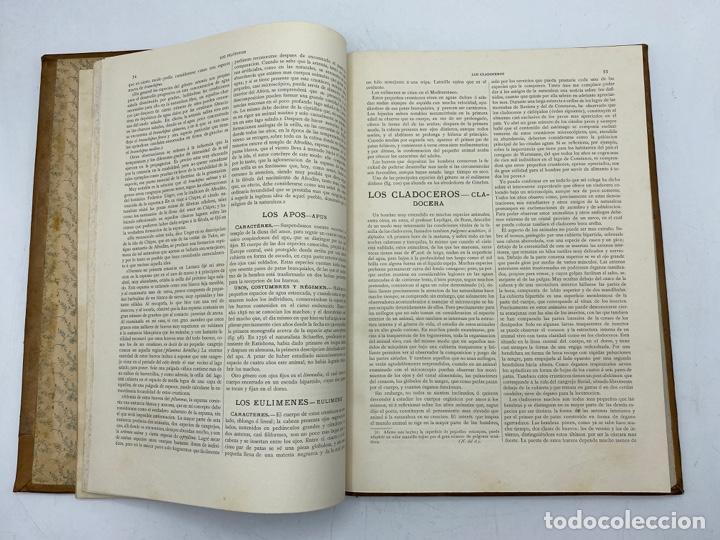 Libros antiguos: LA HISTORIA NATURAL. DR. A. E. BREHM. DEL TOMO 1 AL 7. EDITORES MONTANER Y SIMON.BARCELONA,1880-81. - Foto 49 - 269069853