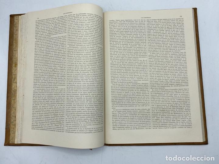 Libros antiguos: LA HISTORIA NATURAL. DR. A. E. BREHM. DEL TOMO 1 AL 7. EDITORES MONTANER Y SIMON.BARCELONA,1880-81. - Foto 50 - 269069853