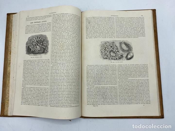 Libros antiguos: LA HISTORIA NATURAL. DR. A. E. BREHM. DEL TOMO 1 AL 7. EDITORES MONTANER Y SIMON.BARCELONA,1880-81. - Foto 51 - 269069853
