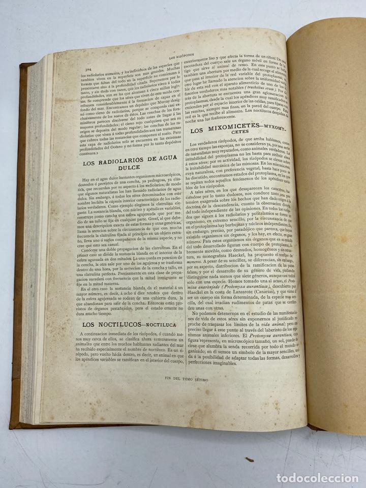 Libros antiguos: LA HISTORIA NATURAL. DR. A. E. BREHM. DEL TOMO 1 AL 7. EDITORES MONTANER Y SIMON.BARCELONA,1880-81. - Foto 52 - 269069853