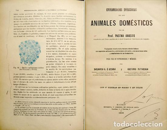 Libros antiguos: ORESTE, Pietro. Enfermedades infecciosas de los animales domésticos. 1912. - Foto 2 - 269076283