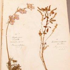 Libros antiguos: HERBARIUM - 1875 - BOTÁNICA - PRECIOSO. Lote 270620018