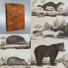 Libros antiguos: 1802 - HISTORIA NATURAL - BUFFON DE IBARRA - LOBO - HURON - GRABADOS - OSO. Lote 271537828
