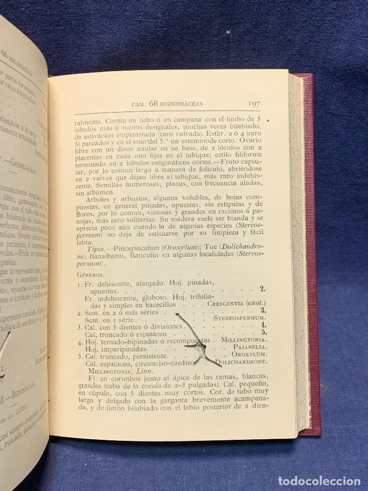 Libros antiguos: LIBRO GENEROS PLANTAS LEÑOSAS DE FILIPINAS SEBASTIAN VIDAL Y SOLER 1883 FIRMADO 22X16CMS - Foto 9 - 281035433