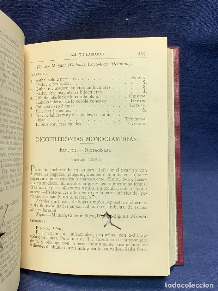 Libros antiguos: LIBRO GENEROS PLANTAS LEÑOSAS DE FILIPINAS SEBASTIAN VIDAL Y SOLER 1883 FIRMADO 22X16CMS - Foto 10 - 281035433
