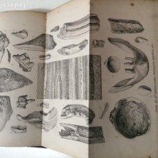 Libros antiguos: COMPENDIO DE GEOLOGIA JUAN VILANOVA AÑO 1872 ILUSTRADO LAMINAS. Lote 285158598
