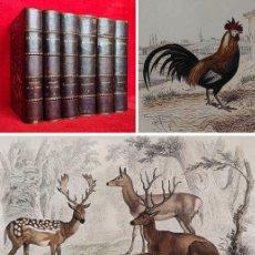 Libros antiguos: AÑO 1841 - 26CM - 9KG - BUFFON - OBRAS COMPLETAS EN 6 TOMOS - MAS DE 300 GRABADOS - HISTORIA NATURAL. Lote 287581543