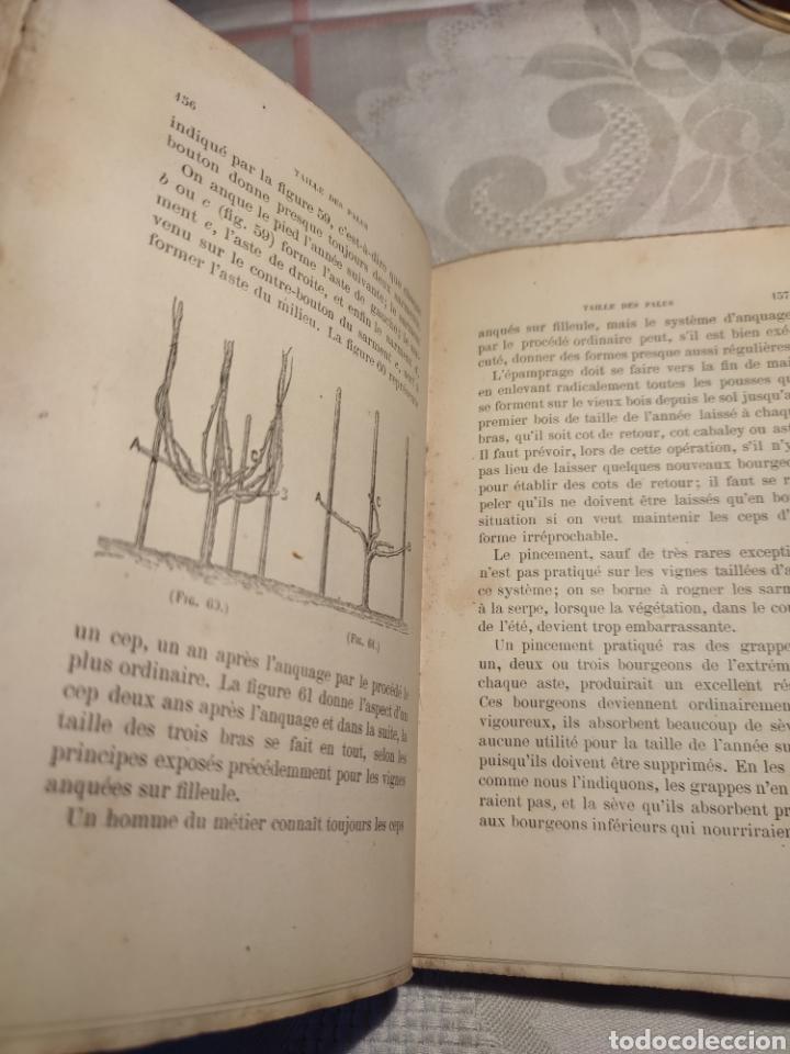 Libros antiguos: Manuel pratique de la culture de la vigne Armando Cazenave (Manual cultivo viña) - Foto 7 - 289686383