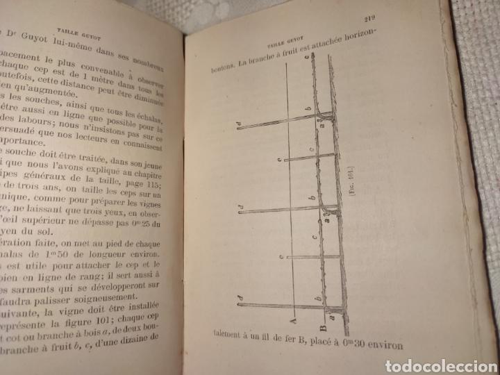 Libros antiguos: Manuel pratique de la culture de la vigne Armando Cazenave (Manual cultivo viña) - Foto 8 - 289686383