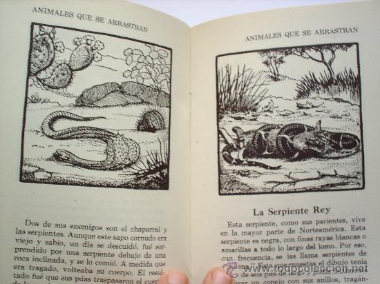 Libros antiguos: la historia ilustrada , animales que se arrastran , reptiles de norte america , 1945 - Foto 2 - 27095398