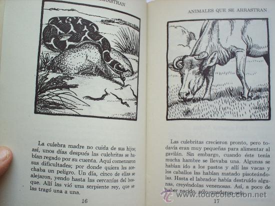 Libros antiguos: la historia ilustrada , animales que se arrastran , reptiles de norte america , 1945 - Foto 3 - 27095398