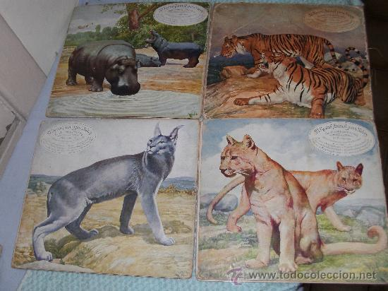Libros antiguos: EL REINO ANIMAL PARA NIÑOS - ANIMALES DAÑINOS - Foto 2 - 26542382