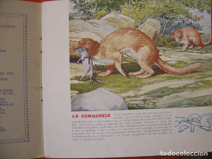 Libros antiguos: EL REINO ANIMAL PARA NIÑOS ANIMALES DAÑINOS Nº1 - Foto 3 - 77790581