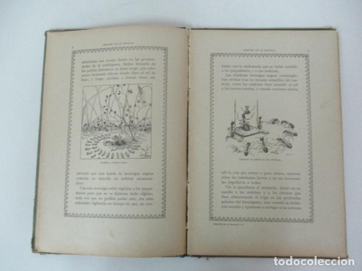 Libros antiguos: Después de la Batalla, Una Ilusa - Manuel Marinel-lo - Dibujos Ricardo Opisso - Biblioteca Natural - Foto 6 - 170852145