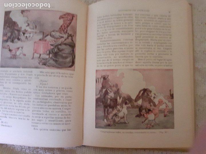 Libros antiguos: Historias de animales - Ilust. Joan Llaverías - Ramón Sopena , 1936 - Foto 10 - 223486181