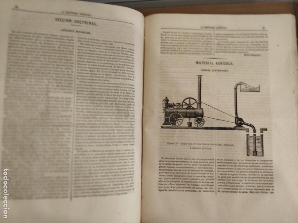 Libros antiguos: INFORME SOCIEDAD ECONÓMICA DE MADRID LEY AGRARIA MELCHOR JOVELLANOS 1866 + REVISTAS REFORMA AGRARIA - Foto 9 - 144583734