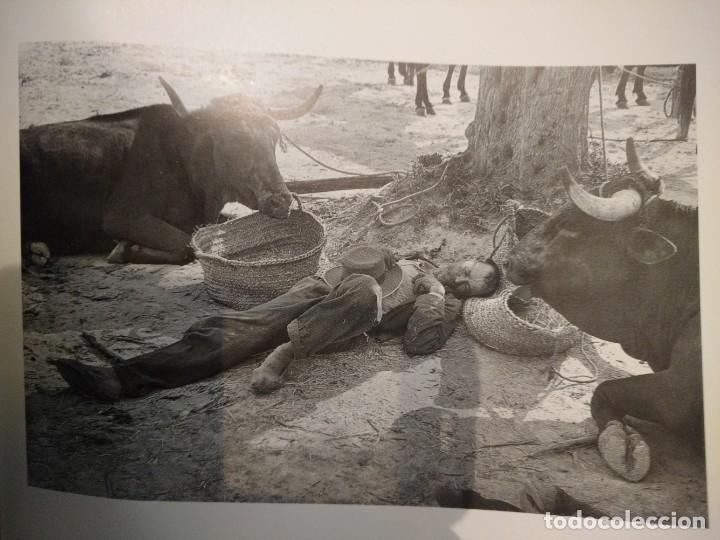 Libros antiguos: Inge Morath y salon nacional fotografia - Foto 5 - 155922194