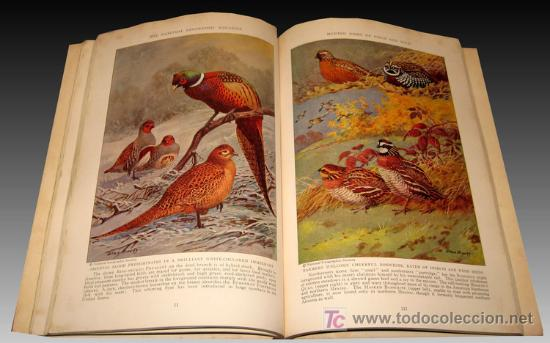 Libros antiguos: 1936 - RARO - Guerra Civil Española - NATIONAL GEOGRAPHIC - Foto 6 - 17022537