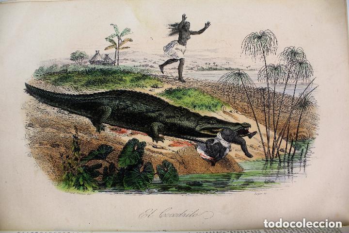 Libros antiguos: Dr.D.Manuel Ortiz de la Vega-Los Héroes y las Grandezas de la Tierra,Historia Universal 8 Tomos,1854 - Foto 12 - 146098206