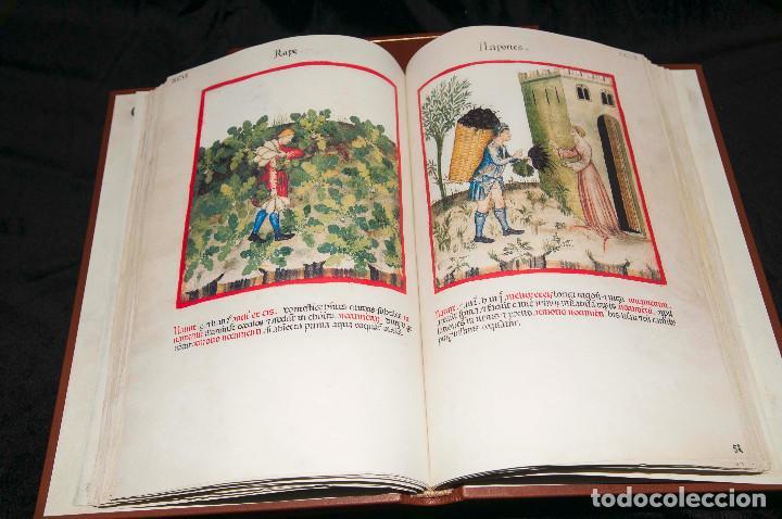 Libros antiguos: Moleiro - Theatrum Sanitatis - Facsimile - Foto 13 - 167910560