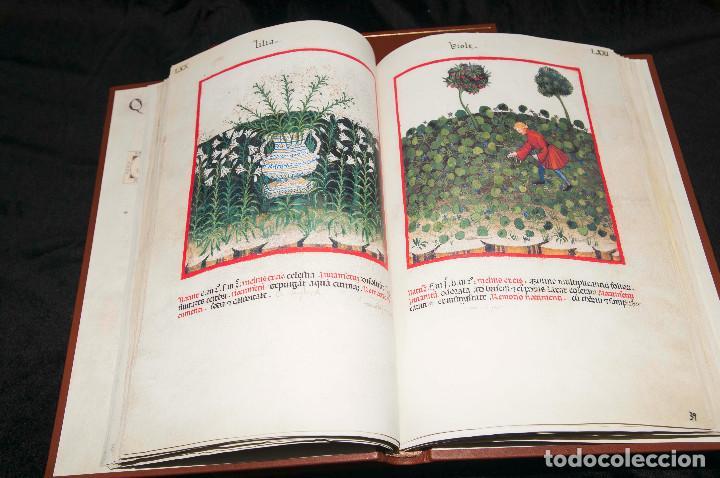 Libros antiguos: Moleiro - Theatrum Sanitatis - Facsimile - Foto 14 - 167910560