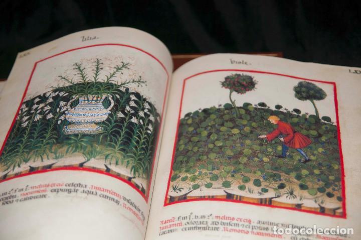 Libros antiguos: Moleiro - Theatrum Sanitatis - Facsimile - Foto 17 - 167910560