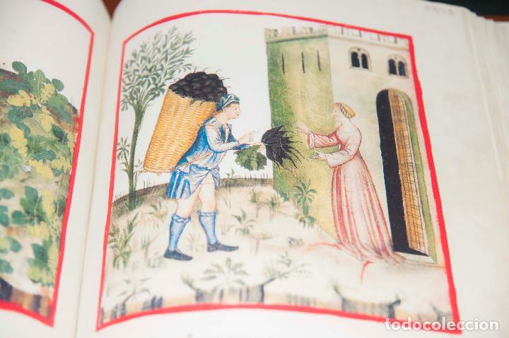 Libros antiguos: Moleiro - Theatrum Sanitatis - Facsimile - Foto 20 - 167910560