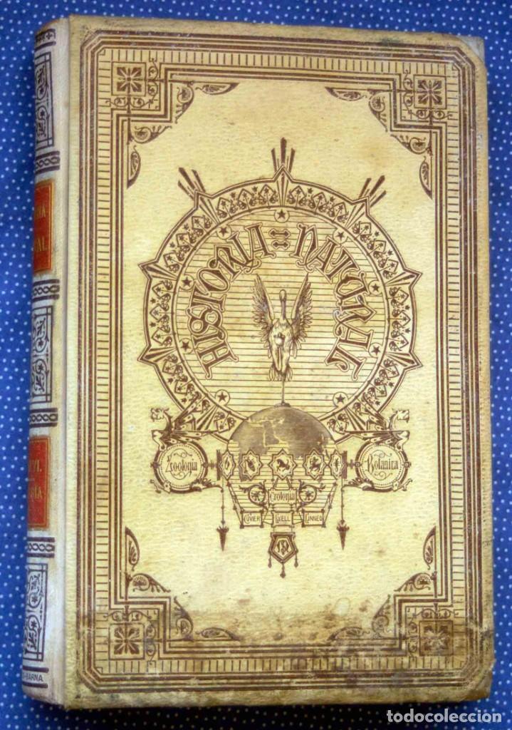 HISTORIA NATURAL. DOCTOR C. CLAUS. TOMO VI- ZOOLOGIA V. TRADUCCIÓN LUIS DE GÓNGORA - MONTANER SIMÓN (Libros antiguos (hasta 1936), raros y curiosos - Historia Antigua)
