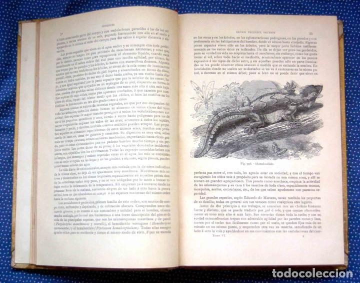 Libros antiguos: HISTORIA NATURAL. DOCTOR C. CLAUS. TOMO VI- Zoologia V. Traducción Luis de Góngora - Montaner Simón - Foto 4 - 268955024