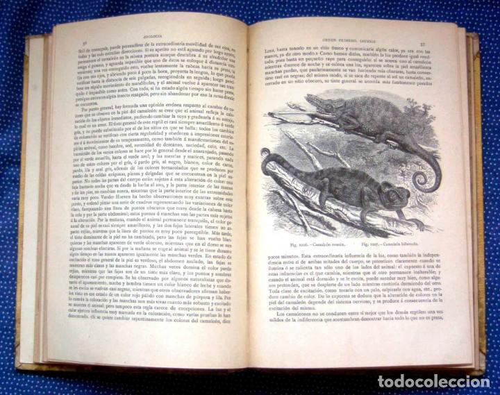 Libros antiguos: HISTORIA NATURAL. DOCTOR C. CLAUS. TOMO VI- Zoologia V. Traducción Luis de Góngora - Montaner Simón - Foto 5 - 268955024